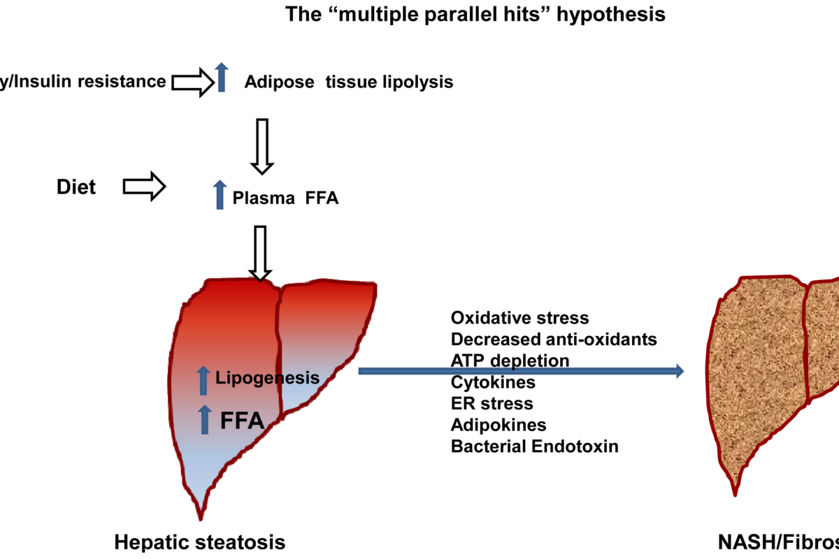 Liver Function And Inflammatory Cytokines Modulation African